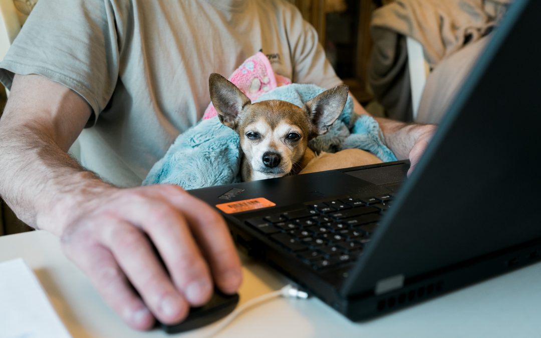 Working from Home; Advice for workers adapting to a new normal
